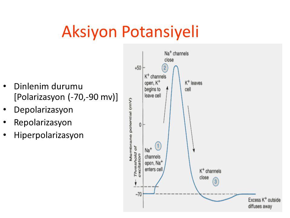 Aksiyon Potansiyeli Dinlenim durumu [Polarizasyon (-70,-90 mv)]